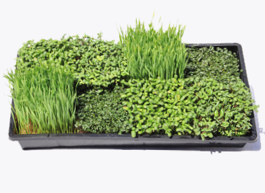Grow Your Own Microgreens - Farmer Starter Kit