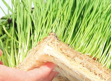 Terrafibre Hemp Grow Mats - hydroponic growing