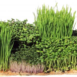 Sustainable Hemp Grow Mat Medium