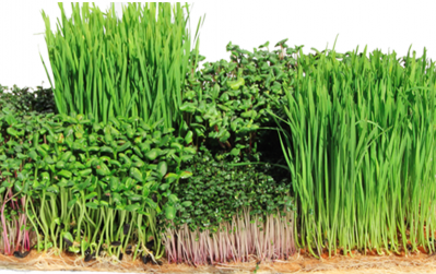 Terrafibre hemp growing media - grow microgreens without soil