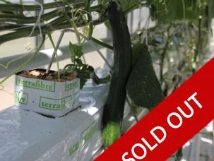 Hemp Slab - Sold Out - hemp fibre growing slab for cucumbers