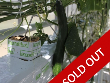 Hemp Slab - Sold Out - hemp fibre growing slab for cucumbers