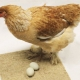 Poultry Nesting Sheets