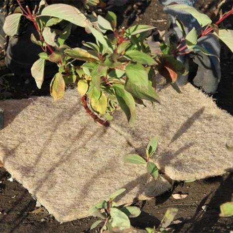 Terrafibre Hemp Tree Squares Grow Product