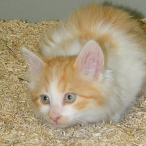 Hemp Pet Product Kitty Litter