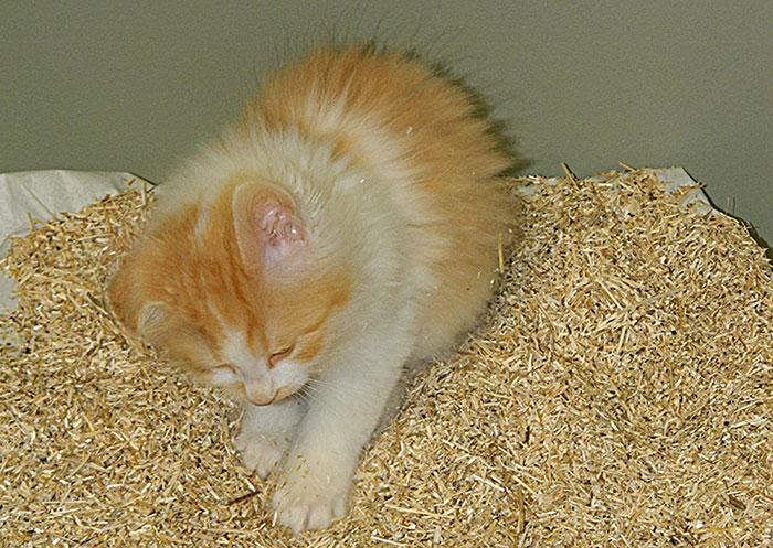Hemp Pet Product Kitty Litter