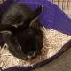 Hemp Small Animal Bedding