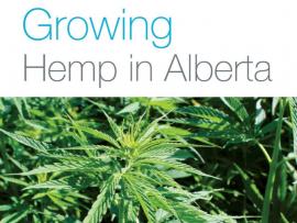 Growing Hemp in Alberta